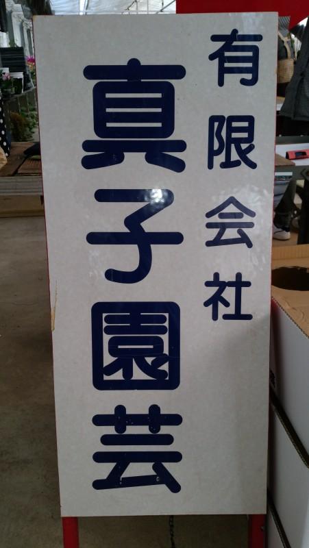 胡蝶蘭 真子園芸4